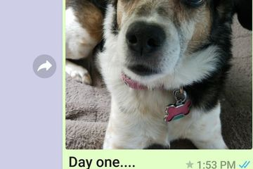 Mom sends her overseas son a picture of his dog.  Every. Single. Day. (34 Photos)