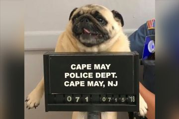 Police release 'pugmug' to find owner of dog who ran away