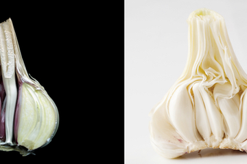 How to grow the best garlic