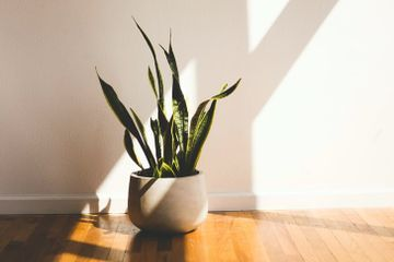 15 Houseplants That Can (Literally) Clean Your House