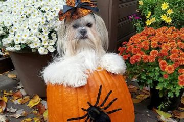 11 Pet Owners Who Put Their Dogs Inside of Pumpkins - Heroes, Every Last 1 of Them