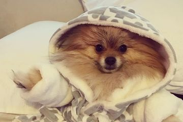 10 Photos of Dogs in Robes Because You're Cold, They're Cold, and It's Getting F*cking Cold