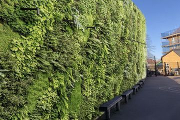 London parents crowd-fund to install living wall at school playground to suck up pollution