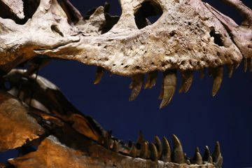 Doctor fights to keep dinosaur skull seized by feds
