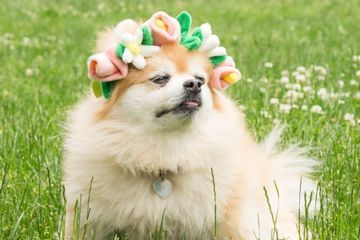 Finally! A Flower Crown Your Dog Will Actually Wear . . . and Maybe Chew on a Little, Too