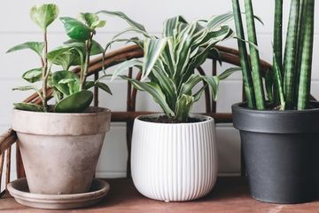 Interacting with houseplants does this for the mind and body