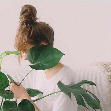 How Indoor Plants Can Help You Avoid Getting Sick This Flu Season